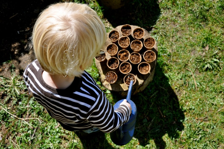 Seeds + soil + water = your first gardening lesson